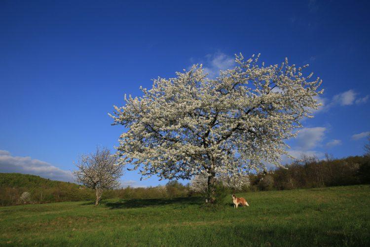 Pomlad v Tisovcu